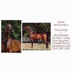 Sstars Wishcometru Arabian Mare For Sale - 4  x 8  Photo Cards