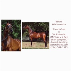 Sstars Wishcometru Arabian Mare For Sale By Diana   4  X 8  Photo Cards   9tqrx7nvy8e7   Www Artscow Com 8 x4 Photo Card - 2