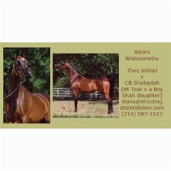 Sstars Wishcometru Arabian Mare For Sale By Diana   4  X 8  Photo Cards   9tqrx7nvy8e7   Www Artscow Com 8 x4 Photo Card - 5
