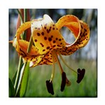 Tiger Lilly Title