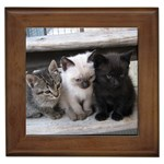Cute Kitten Custom Framed Tile