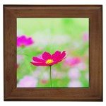 Pink cosmos custom Framed Tile
