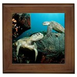 Green Sea Turtles Framed Tile