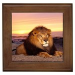 Simba in the Sun Framed Tile