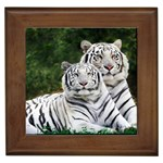 White Phase, Bengal Tigers Framed Tile