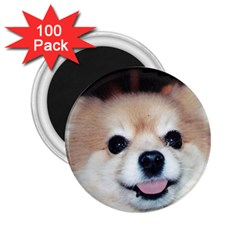 Smiling Pom 2.25  Magnet (100 pack)  by caloart