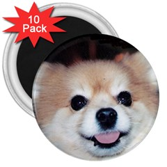 Smiling Pom 3  Magnet (10 pack) by caloart