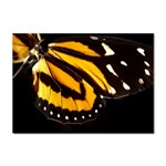 butterfly-pop-art-print-11 Sticker (A4)