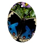butterfly_4 Ornament (Oval)