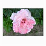 wallpaper_17147 Postcards 5  x 7  (Pkg of 10)