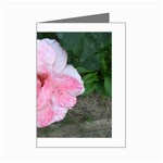 wallpaper_17147 Mini Greeting Cards (Pkg of 8)