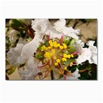 wallpaper_17805 Postcard 4 x 6  (Pkg of 10)
