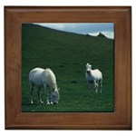 Two White Horses 0002 Framed Tile