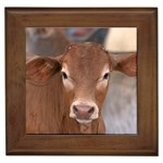 Brown Cow  0003 Framed Tile