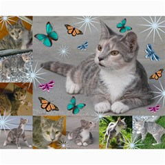 Kitty Pics #3 By R K  Felton   Collage 8  X 10    Gjaiu7wy7w4b   Www Artscow Com 10 x8  Print - 2