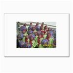 SDC10170 Postcards 5  x 7  (Pkg of 10)