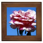flower-bv5wa Framed Tile