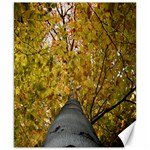 Beech Trunk - Canvas 8  x 10