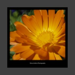 flowercanvas1 by Dena Jenkins 8  x 8  x 0.875  Stretched Canvas