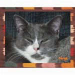 Kitty Pics #1-B - Collage 8  x 10