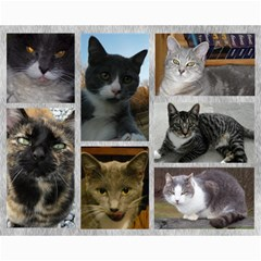 Kitty Pics #1 B By R K  Felton   Collage 8  X 10    Kxlqj2uxbza0   Www Artscow Com 10 x8 Print - 2
