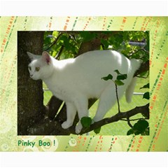 Kitty Pics #1 B By R K  Felton   Collage 8  X 10    Kxlqj2uxbza0   Www Artscow Com 10 x8 Print - 10