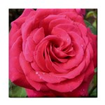 Rose-slideshow-112x131 Tile Coaster