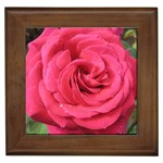 Rose-slideshow-112x131 Framed Tile