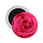 Rose-slideshow-112x131 2.25  Magnet