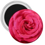 Rose-slideshow-112x131 3  Magnet