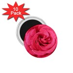 Rose-slideshow-112x131 1.75  Magnet (10 pack)