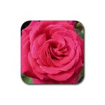 Rose-slideshow-112x131 Rubber Coaster (Square)