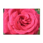 Rose-slideshow-112x131 Sticker (A4)