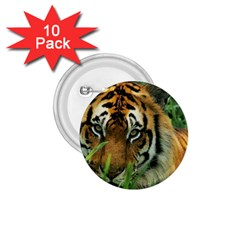 Tiger 1 75  Button (10 Pack)  by ironman2222