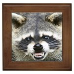 raccoon (2) Framed Tile
