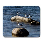 Gulls On Stones - Large Mousepad