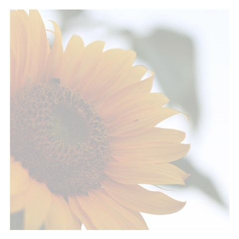 sunflower memo pad