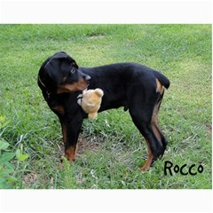 Rocco By Holly    Wall Calendar 11  X 8 5  (12 Months)   Fh1le986vh2u   Www Artscow Com Month