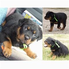 Rotti Puppy Dog Calander By Sharon Hoey Mansfield   Wall Calendar 11  X 8 5  (12 Months)   5ah5wmshbnff   Www Artscow Com Month
