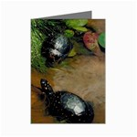 turtle fun mini greeting card Mini Greeting Card