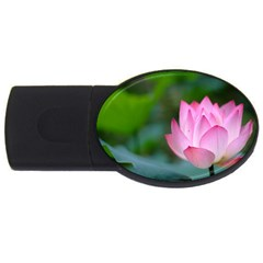 Pink Flowers Usb Flash Drive Oval (4 Gb) by ironman2222