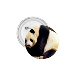 Giant Panda National Zoo 1 75  Button by rainbowberry