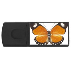 Butterfly Insect 4gb Usb Flash Drive (rectangle) by CowCowDemo