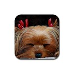 Sleeping Yorkie Painting Scan 300dpi Retouched Copy Rubber Square Coaster (4 pack)