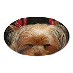 Sleeping Yorkie Painting Scan 300dpi Retouched Copy Magnet (Oval)