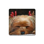 Sleeping Yorkie Painting Scan 300dpi Retouched Copy Magnet (Square)