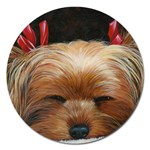 Sleeping Yorkie Painting Scan 300dpi Retouched Copy Magnet 5  (Round)