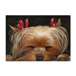 Sleeping Yorkie Painting Scan 300dpi Retouched Copy Sticker A4 (100 pack)