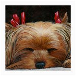 Sleeping Yorkie Painting Scan 300dpi Retouched Copy Glasses Cloth (Medium)