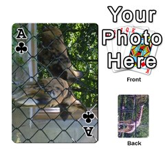 Ace Zoo Animal Playing Cards By Kim Blair   Playing Cards 54 Designs   Iusk7y9cl61k   Www Artscow Com Front - ClubA